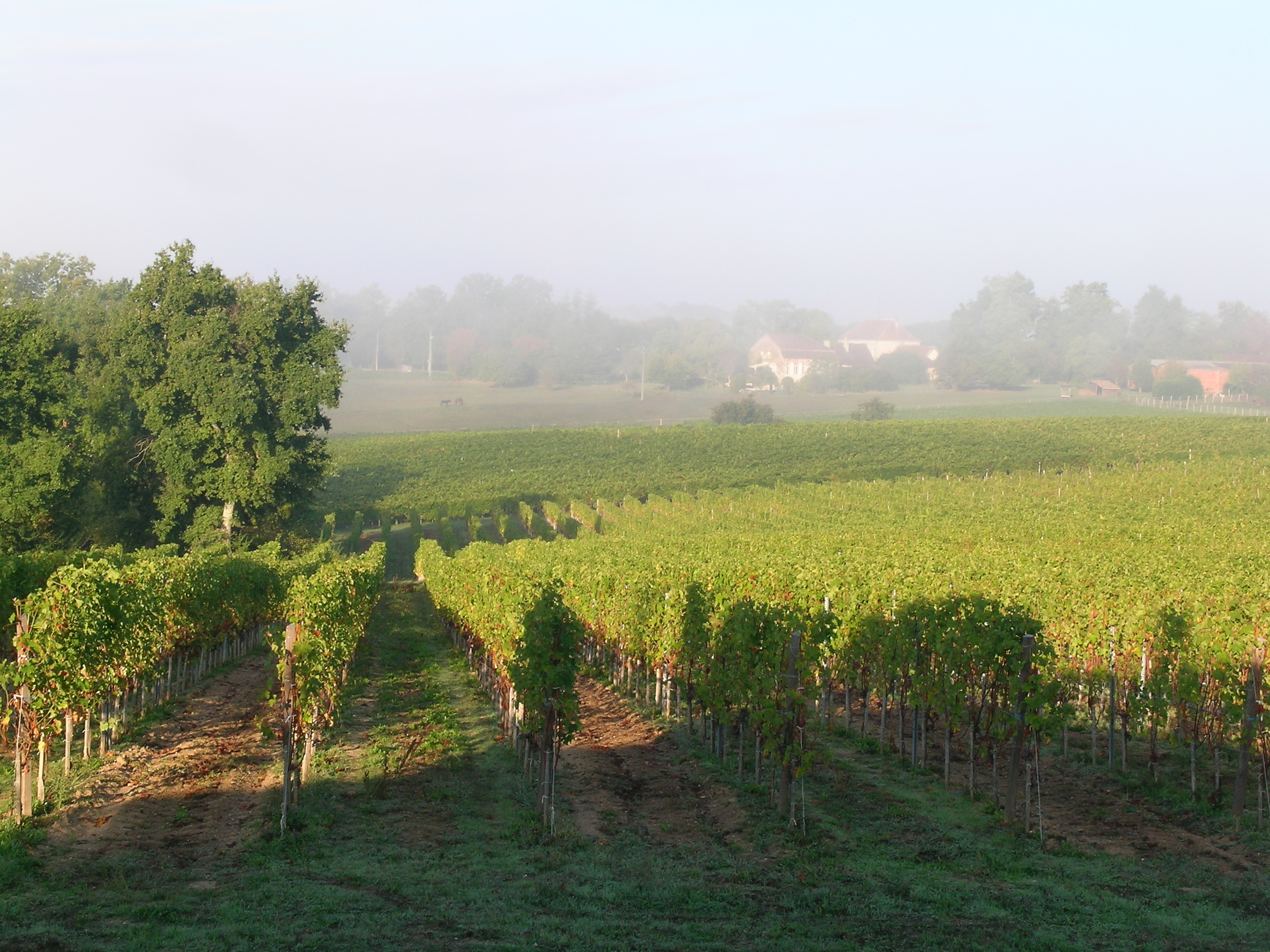 Chambre d'hôtes - Bed & Breakfast - Bergerac - vignoble