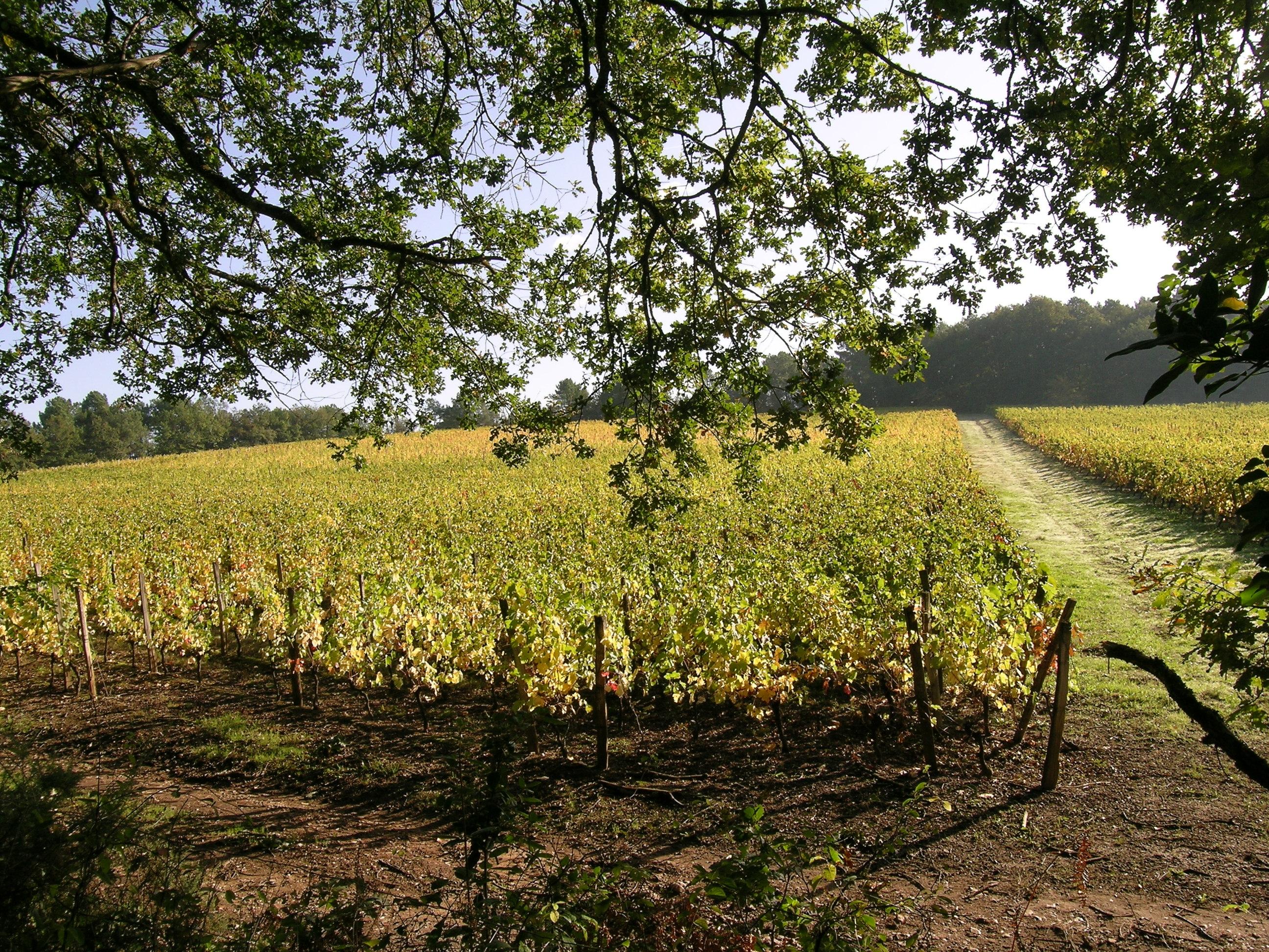 Découvrez les vins de Bergerac